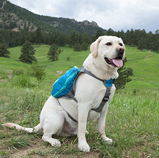 Outward Hound DayPak Dog Backpack