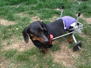 Huggiecart Size 2 XS Dog Wheelchair