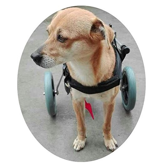 Newlife Mobility Adjustable Dog Wheelchair