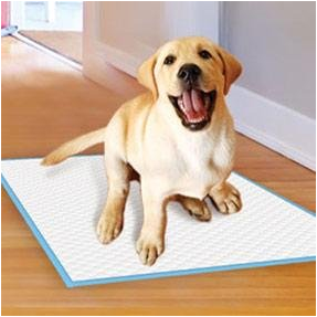 Four Paws Pet Training and Puppy Pads