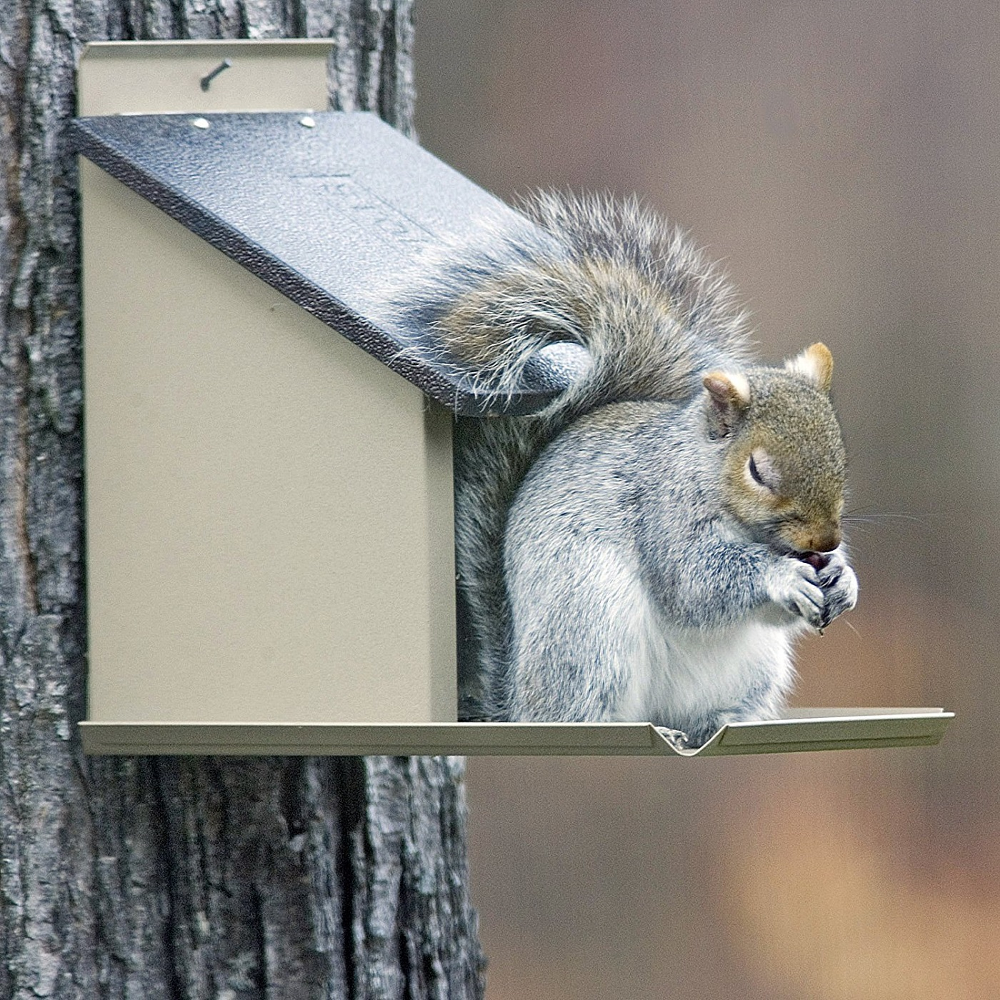 Stokes Select Lunch Box Squirrel Feeder