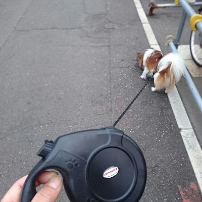 URPOWER Nylon Retractable Dog Leash