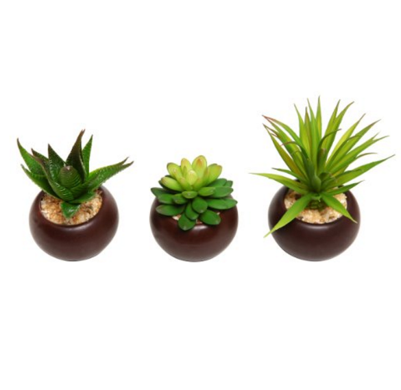 MyGift Mini Succulent Plants